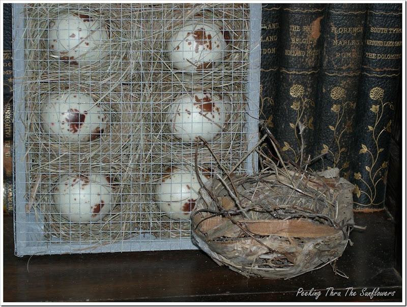 bird nest 005