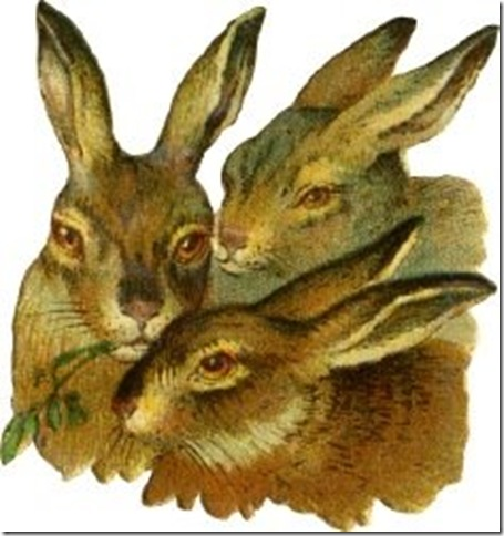 three-rabbits