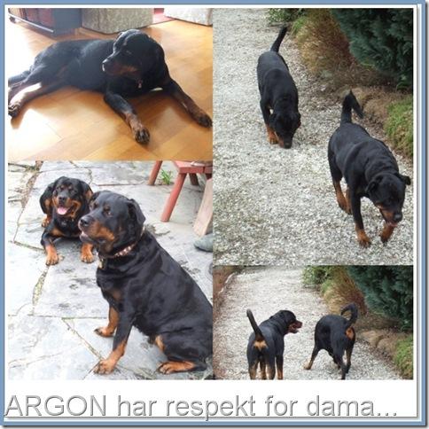 Nemi og Argon-tile