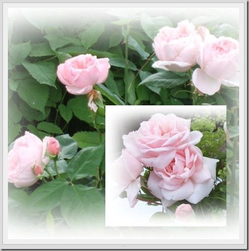 roser-tile