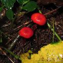 Waxcaps Mushroom