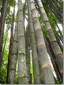 This bamboo