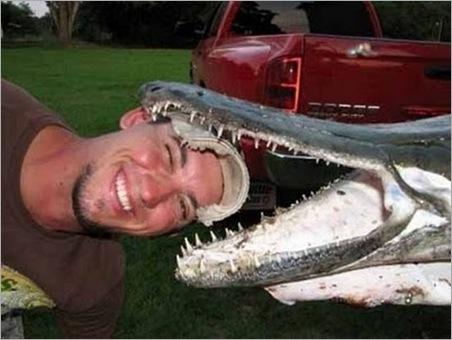 crocodile fish 01