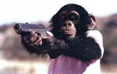 chimpcute4