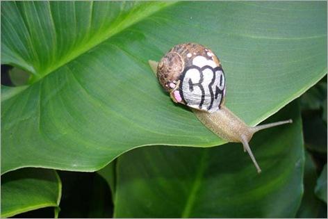 snail gaffiti 03