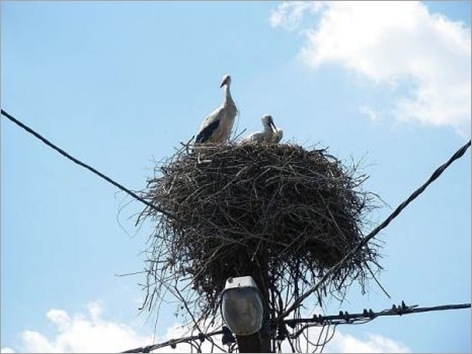 Birds Nests in the Most Bizarre Places 010
