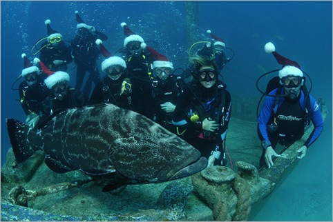 A group shot, complete with a grouper
