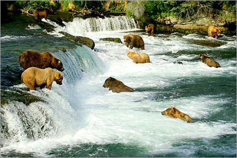 alaska-bears-fishing