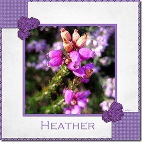 537 SnS-Heather