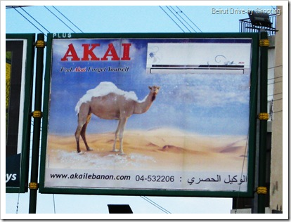 camel (5)