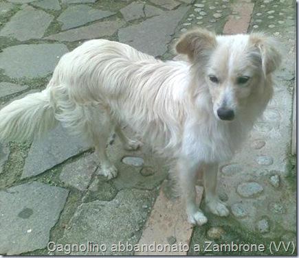 MMS cagnolino a Zambrone