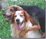 orion e duffy