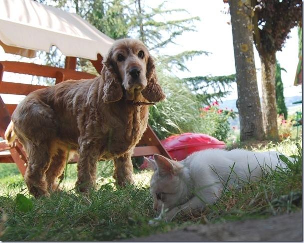chicca e Peggy