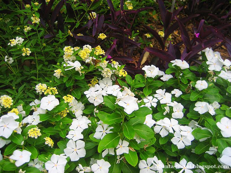 Цветы из ботанического сада Атланты - открытки к 8 марта Atlanta botanical garden flowers 8 marta