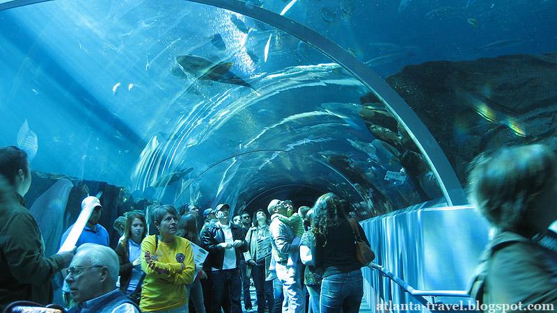 Аквариум в Атланте. Georgia Aquarium.