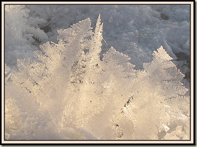 Ice crystals on the Bridgewater Canal - near Timperley - 7 January 2010