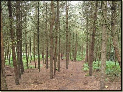 Daresbury Pines