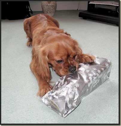 Oscar tackles his lunch pack