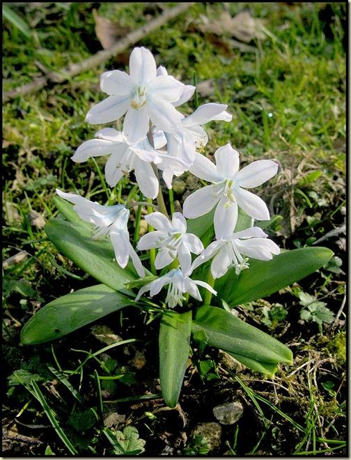 A Garden Flower