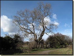 Tree near Moorside