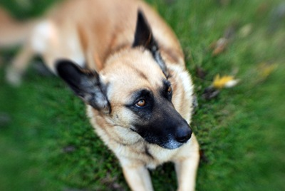 lensbaby sally