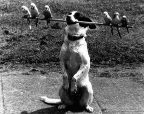 funny-dog-picture-dog-in-black-and-white2222