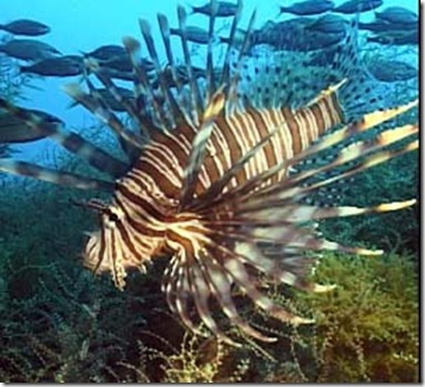 lionfish-atlanticocean