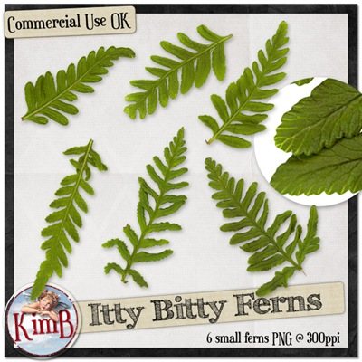 kb-ittybitty-ferns