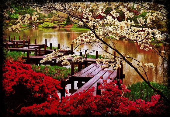 Japanese_Garden_zigzag_bridge_by_Chris_Young copia