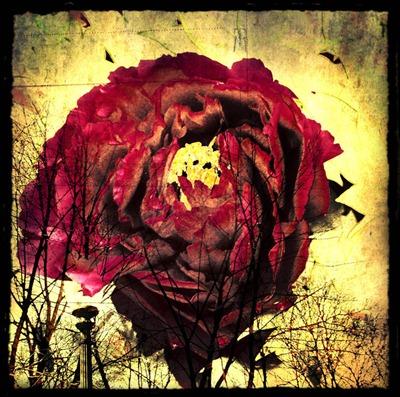 flor grungue