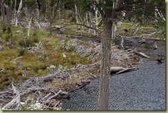 Beaver Dam (1)