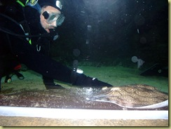 Stroking a flat fish