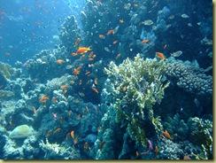 Fish around coral block