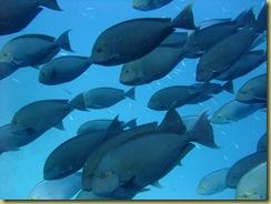 Fish Shoal Small