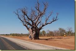 Boab Tree and Pat