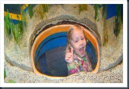 Savannah at Ripley's Aquarium