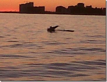 CIPS barco pirata delfin
