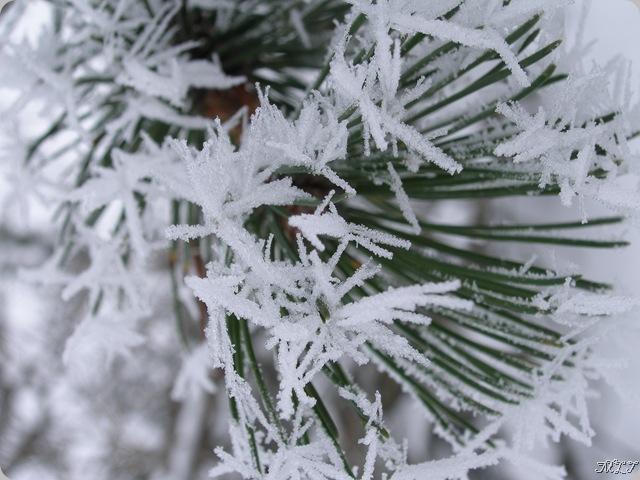 Febr2009 318