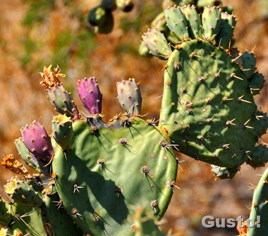 6. Prickly pear fruit