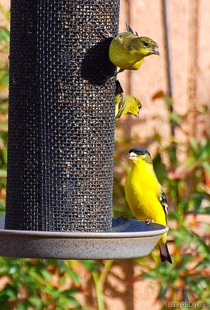 2. 1st bird