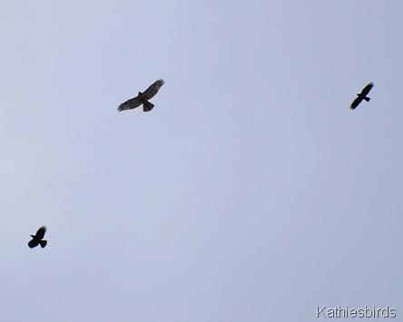 11. kathiebirds