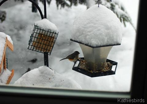 2. feeder kathie