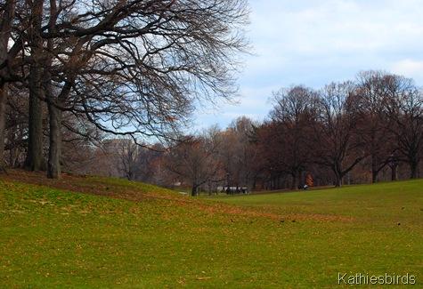8. grassy meadow