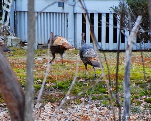 3. turkey 4-4-11