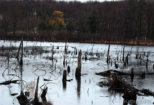 1. Swamp-kab