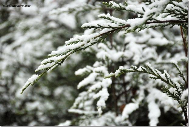 Snow_472