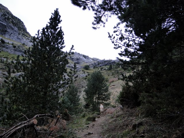 dejamos el bosque