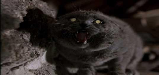gato-emputecido