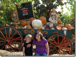 pumpkin patch 009