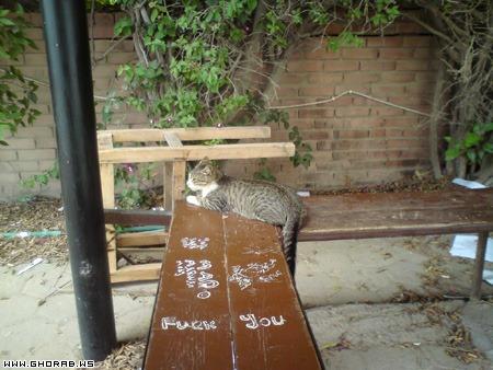 قطة جالسة - Sitting Cat
